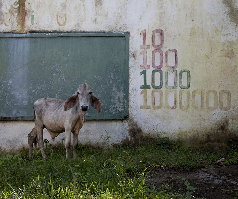 Silencios. Testigo Limón. Montes de María, Colombia