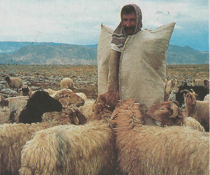 Población de Dgubayazit, en Turquía. A pesar de la pobreza absoluta de ciertas regiones, la hospitalidad y generosidad del pueblo kurdo son comparables sólo con las de las primeras comunidades religiosas.