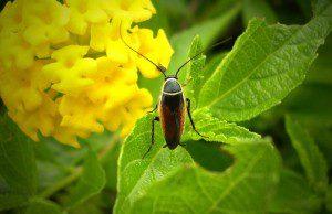 insecticidas_800x669