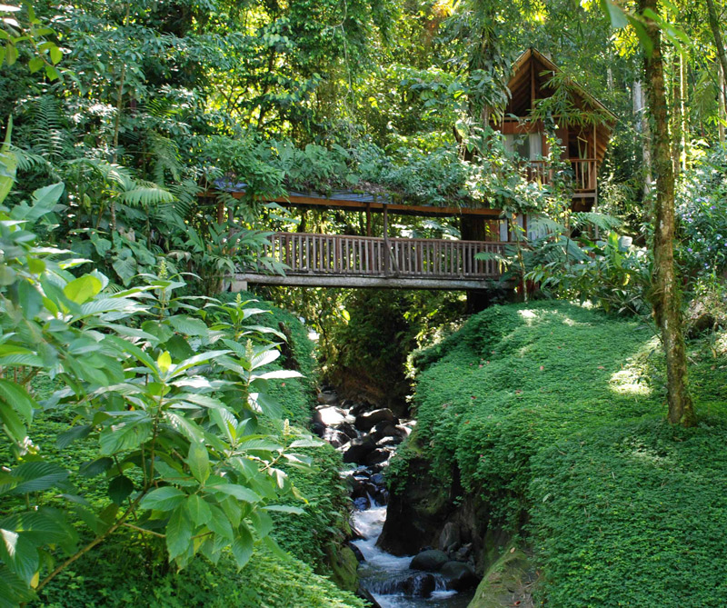 El hotel Monteverde está literalmente incrustado entre bosques naturales