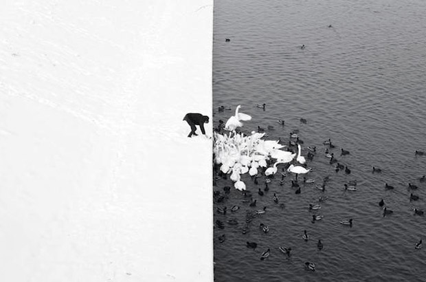 "<div>Categoría monocromática, ""A Man Feeding Swans In The Snow"" Autor: Marcin Ryczek de Polonia.</div>"