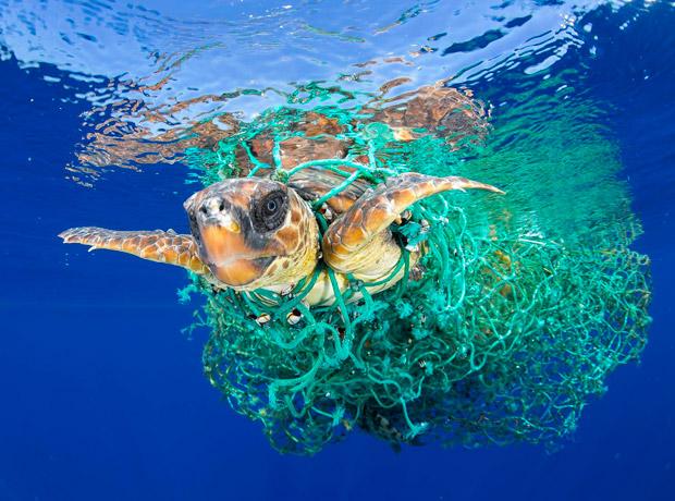 Naturaleza: tomada por Francis Pérez freelance. Título de la foto: Caretta Caretta atrapada.