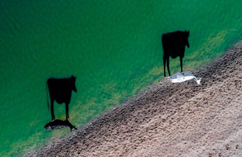 Primer lugar en la categoría de Creatividad. Dos vacas por @ LukeMaximoBell.