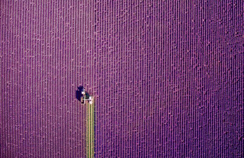 Primer lugar categoría Naturaleza. Provence, corte de verano por @jcourtial.
