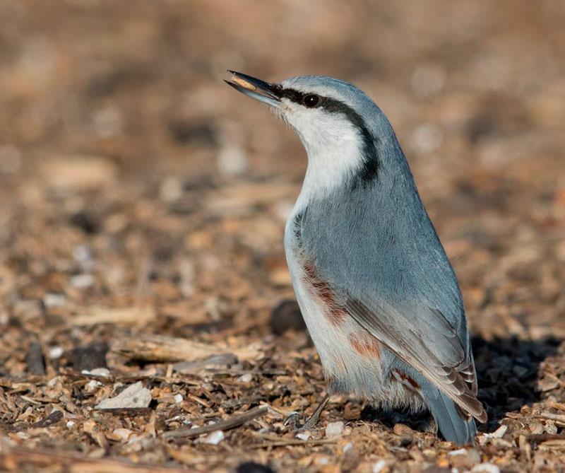 Hábitat para aves en Dauria, Rusia y Mongolia.