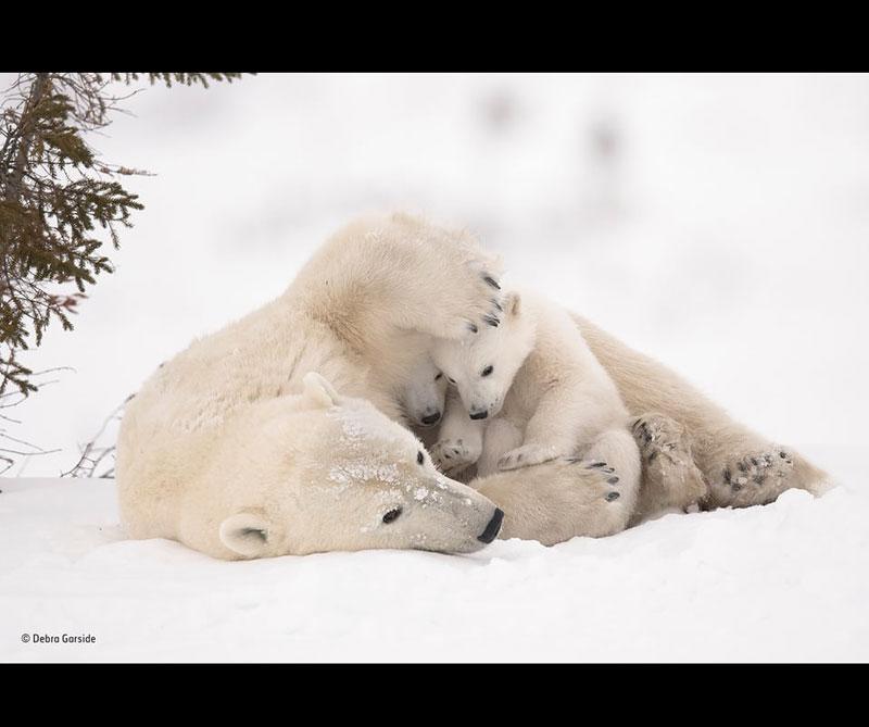 Abrazo cálido. Autor: Debra Garside / Museo de Historia Natural de Londres.
