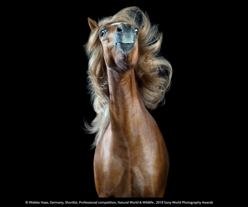 <div>© Wiebke Haas, Alemania, Shortlist, Profesional competition, Natural World & Wildlife, 2018 Sony World Photography Awards.</div>