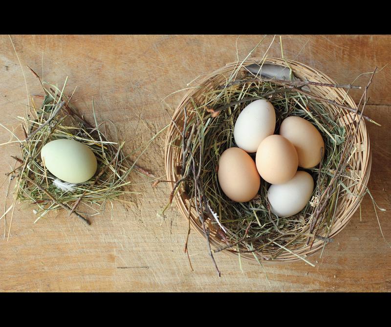 Categoría 11-14 años Ganador: 'Fresh Chicken Eggs' de Stefan Dedu (Rumanía)