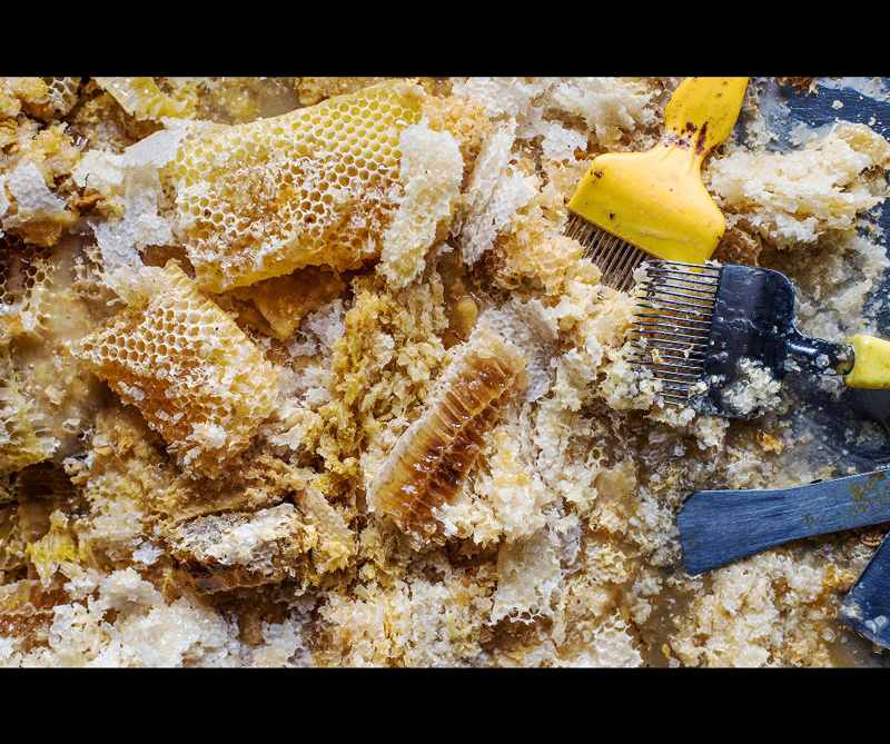 Categoría Student Photographer of the Year Ganador: 'Honeycomb and Wax' de Becci Hutchings (Reino Unido)