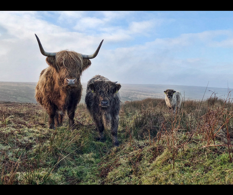 Categoría On the Phone (in aid of Action Against Hunger) Ganador: 'Exmoor Beasts' de Paul Steven (Reino Unido)