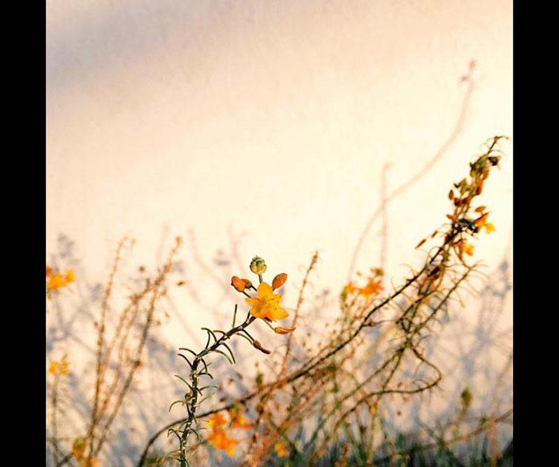 <div>Floral: Alison Helena.</div>