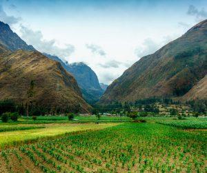 Perú: Continúe el recorrido en Perú donde está floreciendo la cultura del café. Esta zona es la tercera más grande de cafetales en América del Sur y hace parte del orgullo gastronómico del país, pues su café tiene un sabor balanceado con notas achocolatadas, cítricas y dulces, ideales para todos los paladares. Encuentre el mejor café en Cusco, gracias a sus cultivos en la zona selvática.