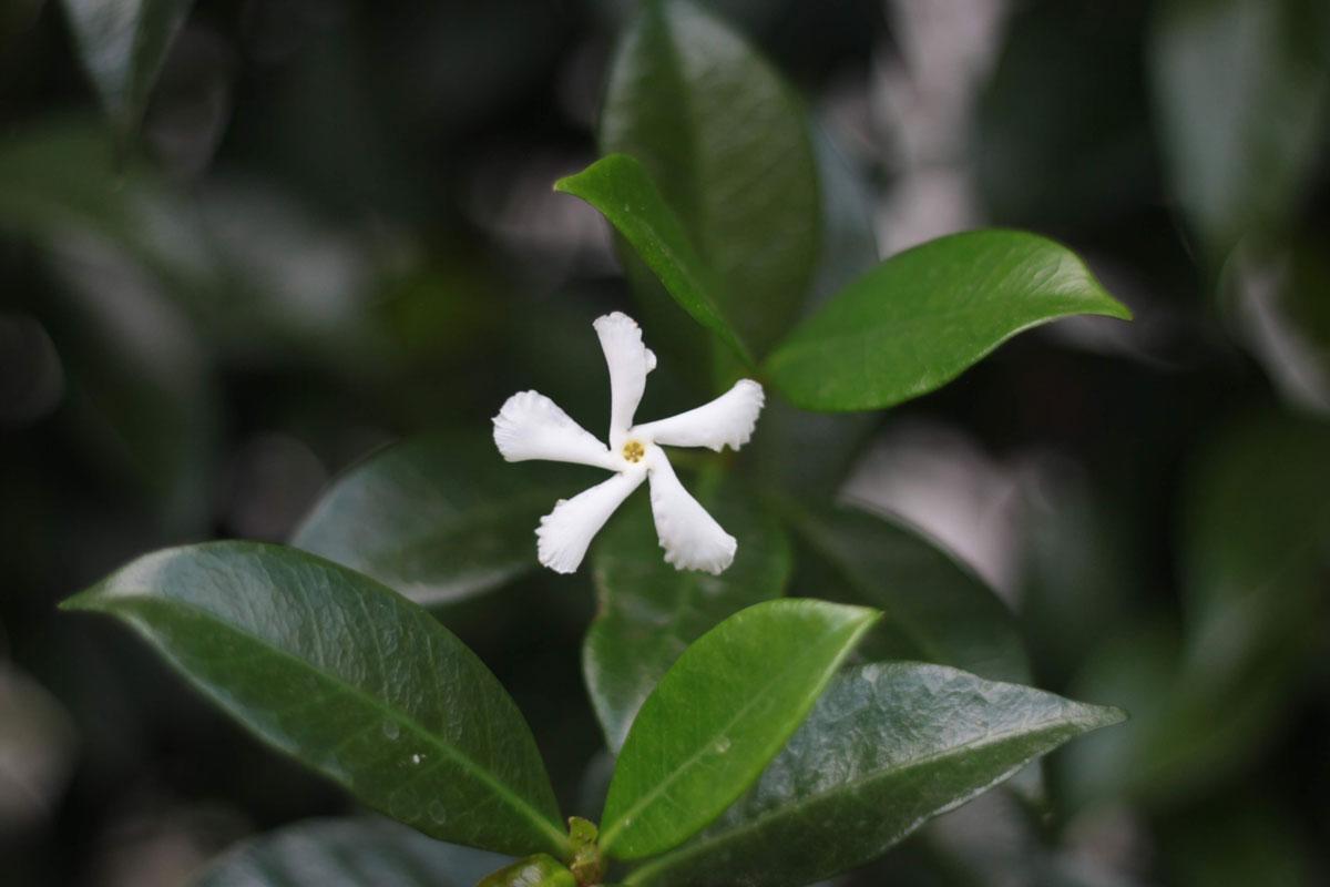 plantas según la Nasa