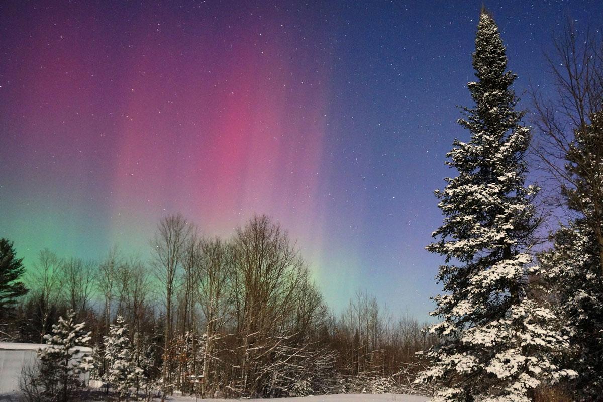 aurora morada con árbol