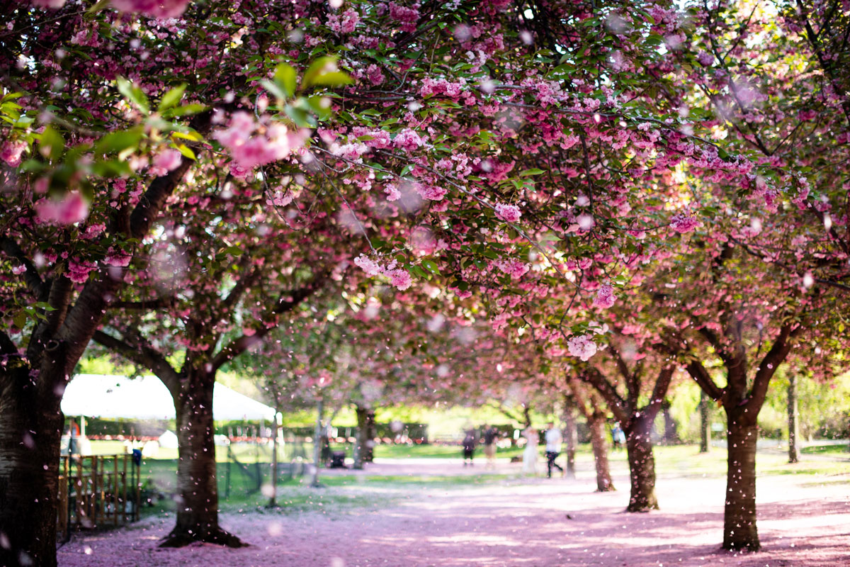 Botanical Garden Brooklyn
